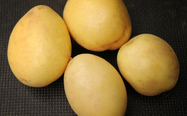 Ziemniaki żółte ogólnoużytkowe STANDARD