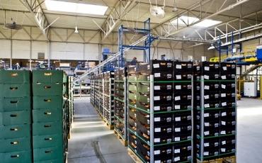 W trakcie uprawy cebula i ziemniaki są przez nas kontrolowane, także proces zbioru, po którym surowiec trafia do naszych magazynów- zgodnie z wymaganiami jakościowymi .
